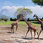 平川動物園の遊園地の料金は?夜まで楽しめる動物園2018
