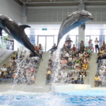 鹿児島水族館料金や割引まとめ!イルカショーの時間もチェック
