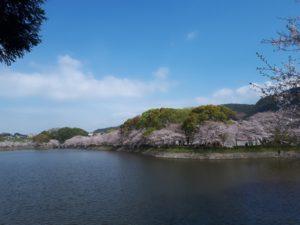 立岡自然公園さくら