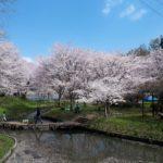 立岡自然公園(熊本)でお花見、桜の見頃や駐車場について